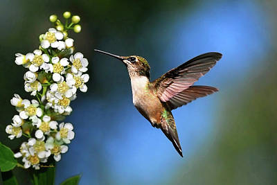In Flight Photograph - Just Looking by Christina Rollo
