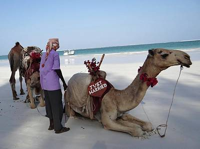 Exploramum Photograph - Just Married Camels Kenya Beach by Exploramum Exploramum