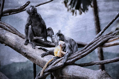 Photograph - Just Monkeying Around by Karol Livote
