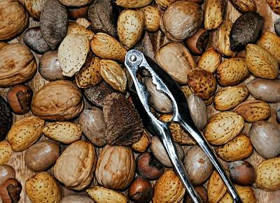 Photograph - Just Nuts by Diana Angstadt