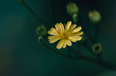 Photograph - Just One Flower by Nisah Cheatham