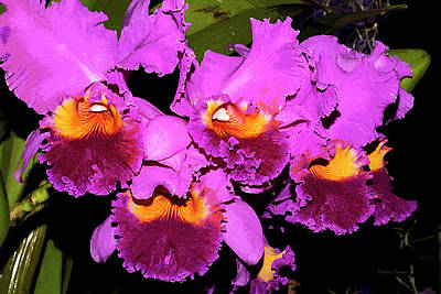 Photograph - Just Orchids Painterly by Phyllis Denton