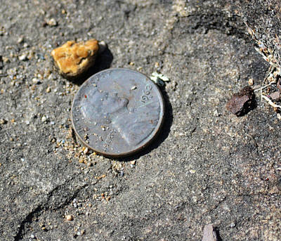 Photograph - Just Out Of Reach - Lincoln Penny by rd Erickson