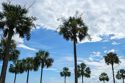 Photograph - Just Palm Trees by Jennifer White