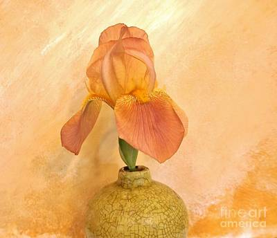 Photograph - Just Peachy Iris by Marsha Heiken