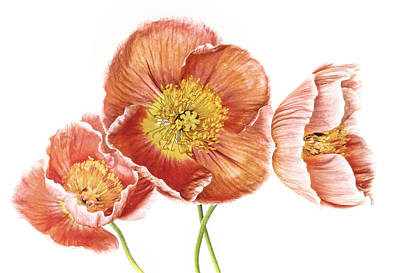 Photograph - Just Peachy Poppies by David and Carol Kelly