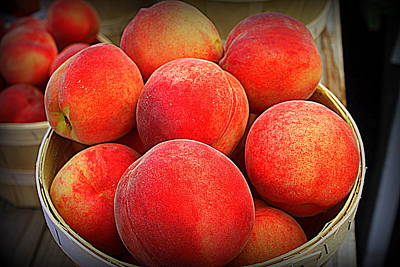 Photograph - Just Peachy by Suzanne DeGeorge