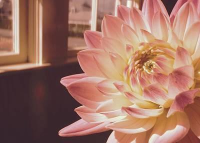 Photograph - Just Petals by JAMART Photography