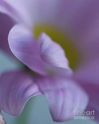 Photograph - Just Petals by Linda Hoye