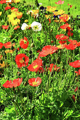 Photograph - Just Poppies by Nareeta Martin