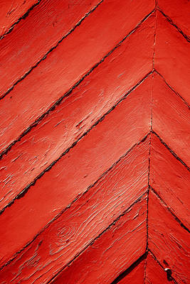 Photograph - Just Red by Karol Livote