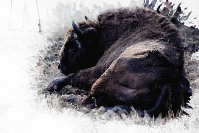 Bison Digital Art - Just Relax by Diana Van