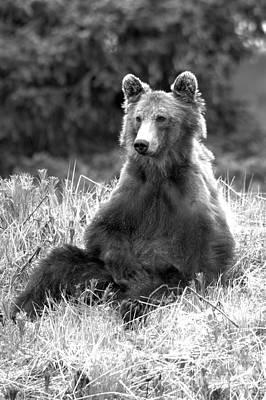 Photograph - Just Sitting Around At Banff Black And White by Adam Jewell