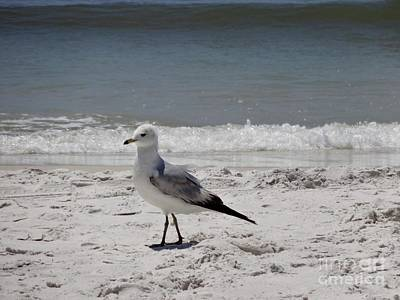 Sea Wall Art - Photograph - Just Strolling Along by Megan Cohen