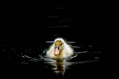 Photograph - Just Swimming by Michael Niessen