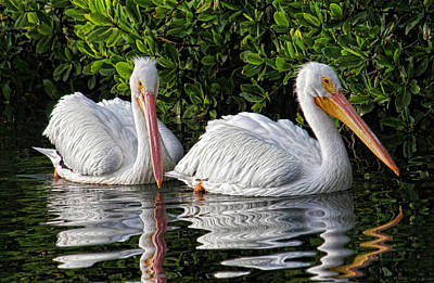 Bird Photograph - Just The Two Of Us by HH Photography of Florida