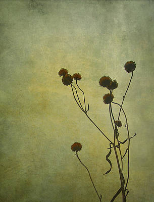Photograph - Just Weeds . . . by Judi Bagwell