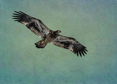 Photograph - Juvenile Bald Eagle - Horizontal by Patti Deters
