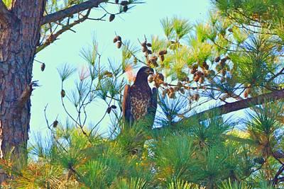 Photograph - Juvenile Bald Eagle by Lisa Wooten
