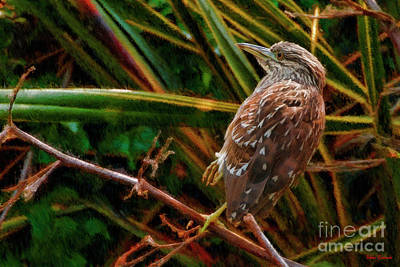 Photograph - Juvenile Black-crowned Night Heron by Blake Richards