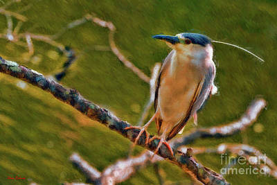 Photograph - Juvenile Black-crowned Night Heron On Look Out  by Blake Richards