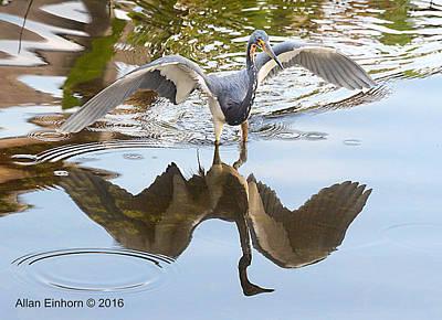 Juvenile Blue Heron Original by Allan Einhorn