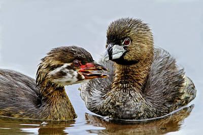 Photograph - Juvenile Grebe And Mom by Craig Strand
