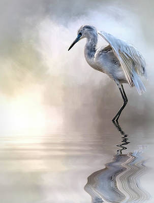 Juvenile Heron Art Print by Cyndy Doty