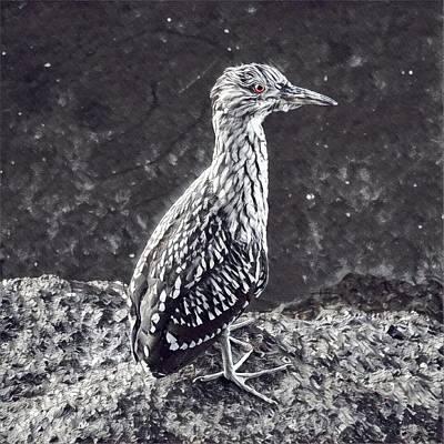 Juvenile  Art Print by John Pierpont