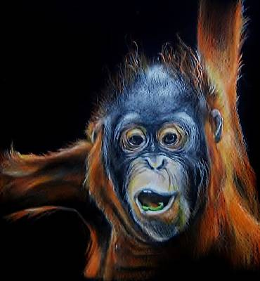 Orangutan Drawing - Juvenile Orangutan by Jean Cormier