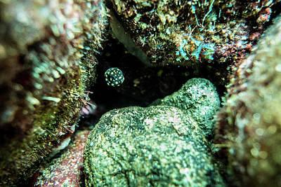Trunkfish Wall Art - Photograph - Juvenile Trunkfish by Jim Murphy