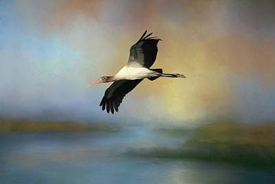 Art Print featuring the photograph Juvenile Woody by Donna Kennedy