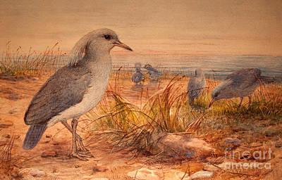 Wild Animals Painting - Kagu by Joseph Wolf