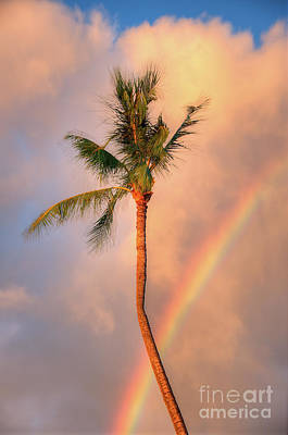 Photograph - Kahekili Beach Park Rainbow Palm by Kelly Wade