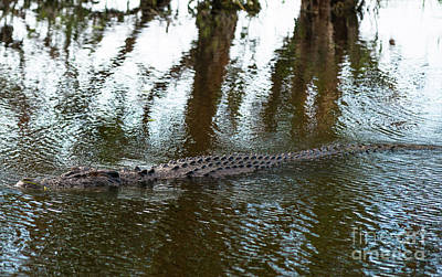 Photograph - Kakadu Croc by Andrew Michael