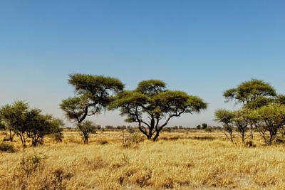 Photograph - Kalahari Landscape by Kay Brewer