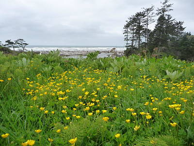 Photograph - Kalaloch Bouquet by Joel Deutsch