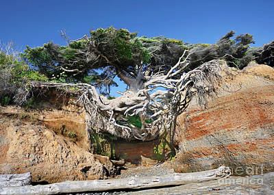 Photograph - Kalaloch Tree Of Life by Martin Konopacki