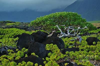 Photograph - Kalaupapa Beach Scene by Craig Wood