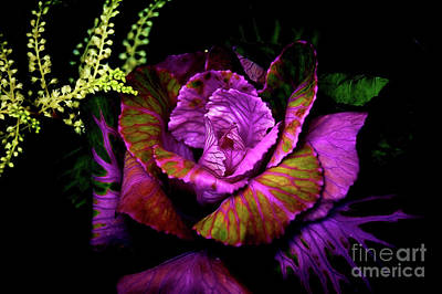 Photograph - Kale And Astilbe by Diana Mary Sharpton