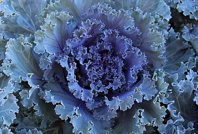 Photograph - Kale by Michiale Schneider