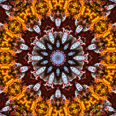 Photograph - Kaleidoscope In Gold by Marilyn Carlyle Greiner