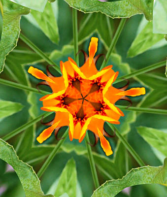 Kaleidoscope Of A Poppy Art Print by Cathie Tyler