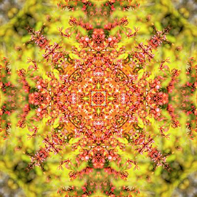 Digital Art - Kaleidoscopia - Berberis Folly by Frans Blok