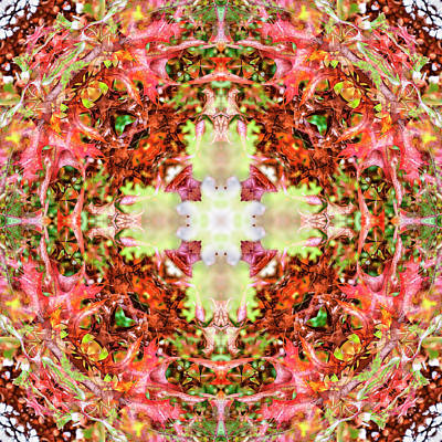 Digital Art - Kaleidoscopia - Burgundy Foliage by Frans Blok