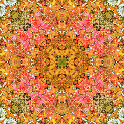 Digital Art - Kaleidoscopia - Leaves And Branches by Frans Blok
