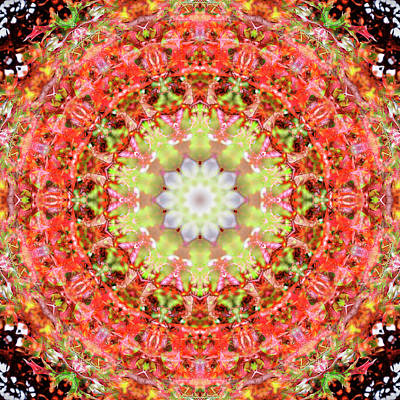 Digital Art - Kaleidoscopia - Round Robin by Frans Blok