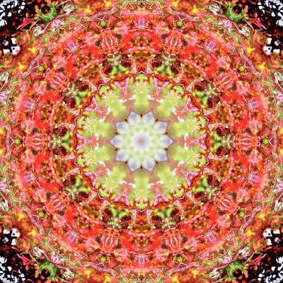 Digital Art - Kaleidoscopia - Round Robin by Frans Blok