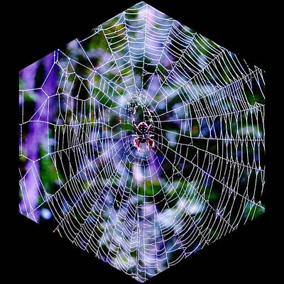 Photograph - Kaleidoscopic Web by Betty Buller Whitehead