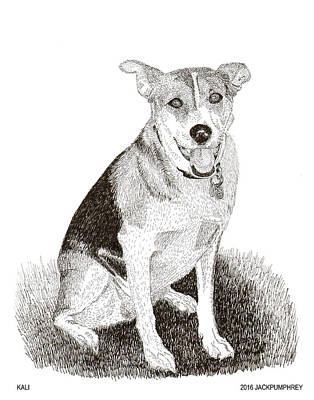 Drawing - Sweet  Rescue Dog by Jack Pumphrey